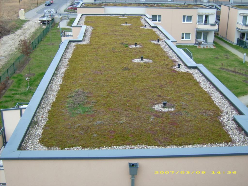 dachbegrünung - mit dem gründach einen wichtigen beitrag für die